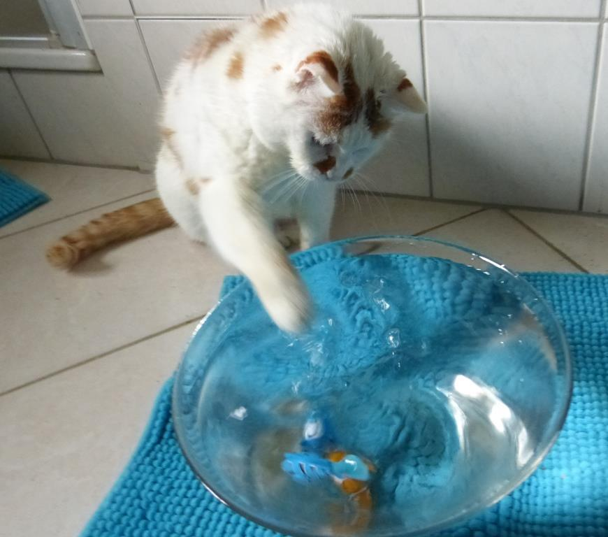 fischspiele